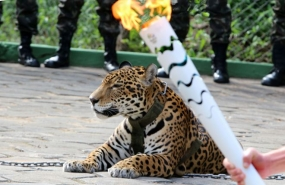 Rio 2016: Jaguar in Amazon torch relay shot dead