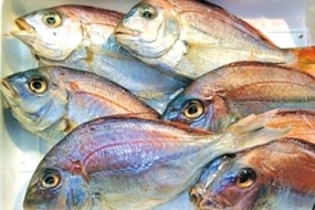 SL Government to get the EU ban on fish exports lifted