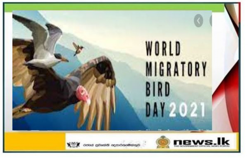 Today is the World Migratory Bird Day