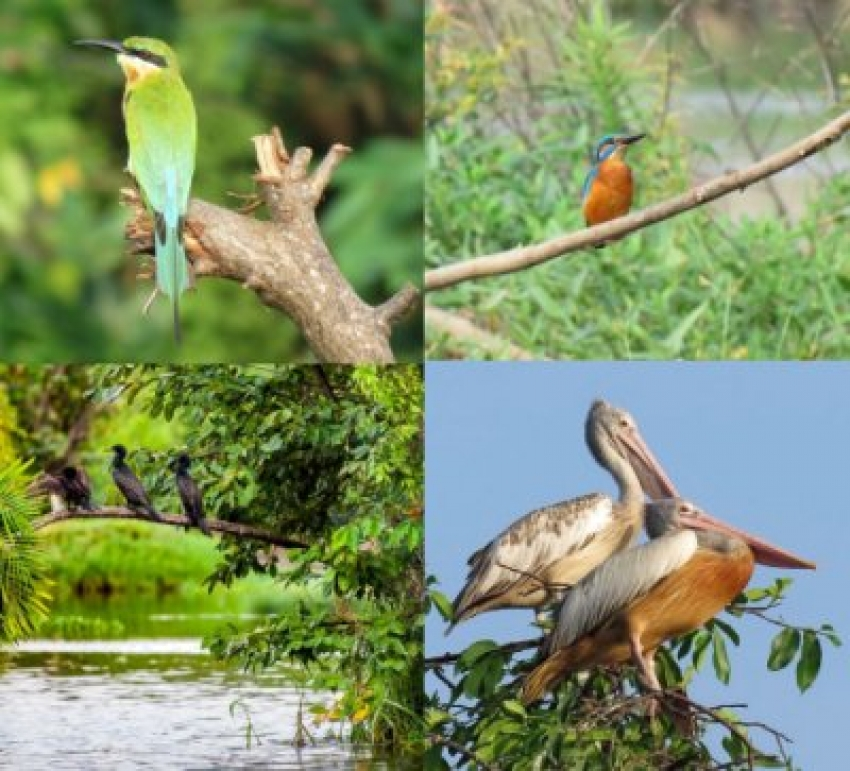 Wings of Change: World Migratory Bird Day 2019