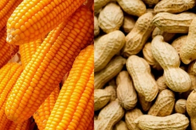 Import of maize and peanuts suspended from 15th