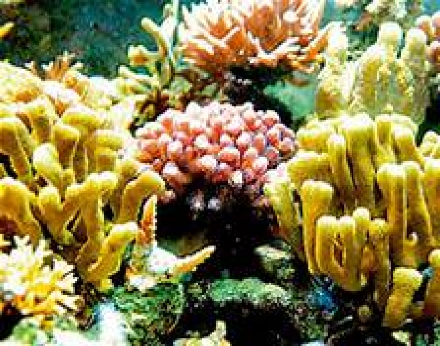 Lanka to be a member of the International Coral Reef Initiative