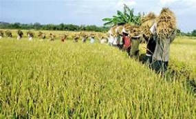 Govt. to introduce a fertilizer subsidy for organic paddy farmers