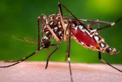 Record high dengue cases this year