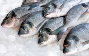 Growth of per capita fish consumption in Sri Lanka