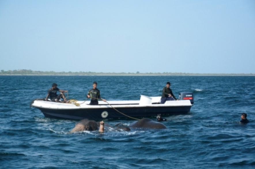 SL Navy rescues two more jumbos in the seas off Trincomlee