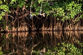 Sri Lanka declares Mangroves as nature reserves