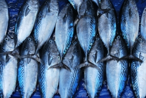 A certified price for Tuna fish from the Ceylon Fisheries Corporation