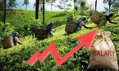 Plantation workers' daily basic wage increased to Rs.700