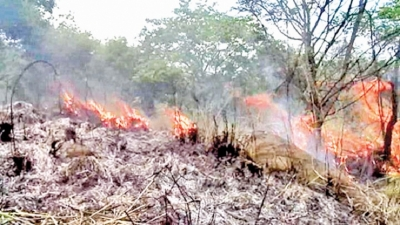 100% increase in human-induced forest fires - Ministry