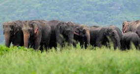 Wild Locality  for Roaming Wild Elephants in Kumaragalakanda