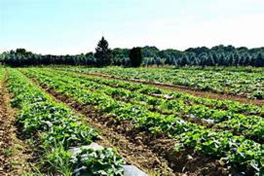 Organic farmers to get Rs. 18,000 per hectare from next Maha season