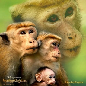 "$16.4 million ""Monkey Kingdom"" launched today in Sri Lanka"