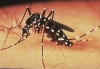 Ministry warns of Dengue outbreak