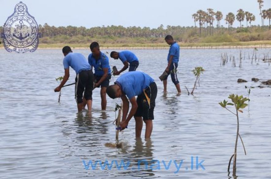 Navy plants Mangroves on International Day