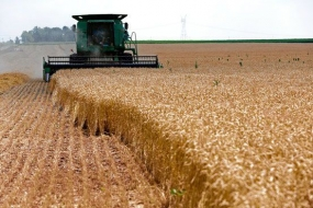 Brazil Registers Record Crop of Grains in 2014