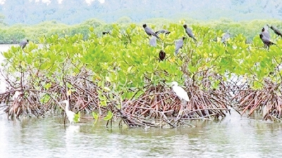 Conserving wetlands in Sri Lanka