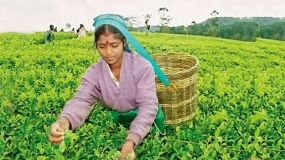 Tea exports up to 25.2 Mnkg in July