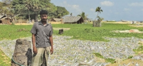 Rehabilitated LTTE cadres cultivate 500 acres in the North