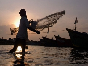 Increase in sea food exports
