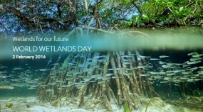 World Wetlands Day 2016