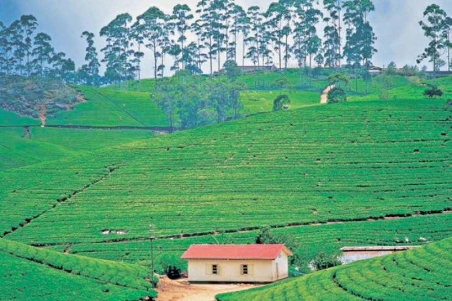 TEA EXPORTS TO JAPAN BACK TO NORMAL SOON SAYS TEA BOARD