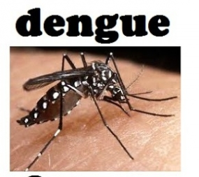 57.85% Dengue Cases reported from Western Province