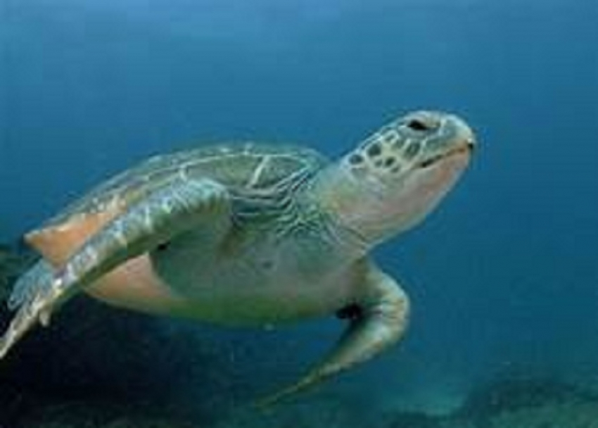 Navy spares more time  for turtle conservation