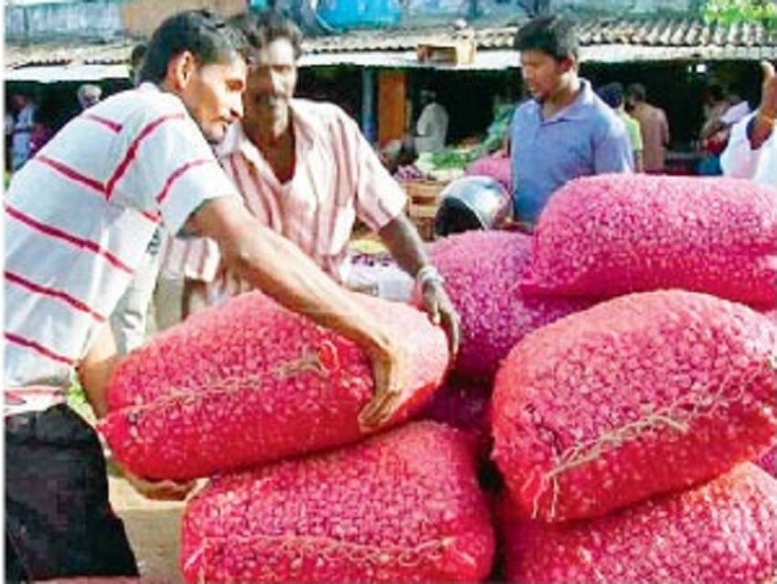 Bumper red onion harvest in Jaffna