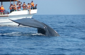 Meeting on mitigating blue whale ship-strikes in Sri Lankan waters