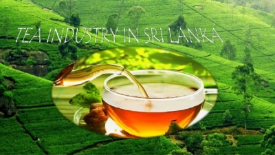 Sri Lanka's tea output  recovering to 300mn kg in 2018