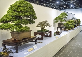Exhibition of Bonsai starts today