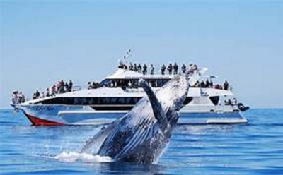 Whale watching in Mirissa earns Wildlife Department Rs. 30 million in 12 days