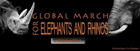 Global March for Elephants and Rhinos: GMFER- World Animal Day