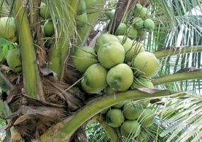 USD 01 billion revenue  from Coconut based industries by 2020