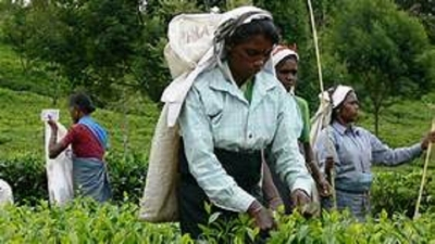 Plantation workers get wage hike, arrears