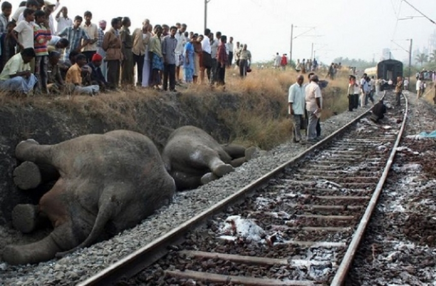 Committee to prevent elephant deaths by trains