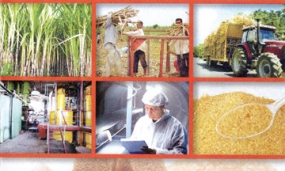 Sri Lanka's Four Sugar Industry Plants to be developed