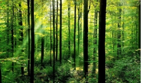 30,000 persons benefit from protecting forest in the Dry Zone