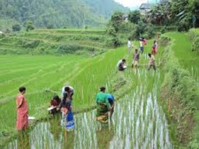 Program to popularize traditional local paddy cultivation in Kegalle