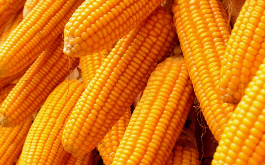 Maize imports slashed by 50 percent