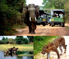 Set your sights for a remarkable park adventure - Wasgamuwa National Park