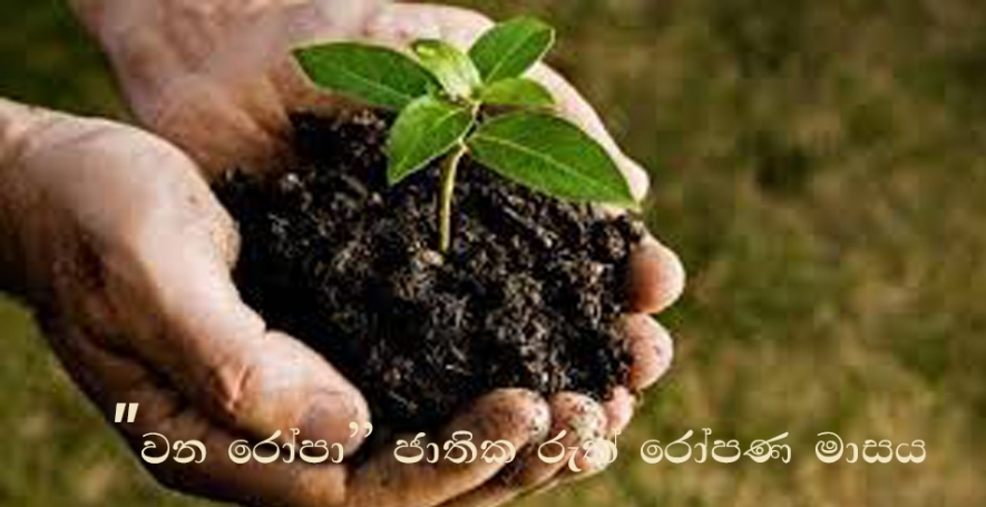 """Wana Ropa"" National Tree Planting Month begins tomorrow"