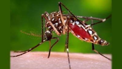 Dengue response intensified in SL