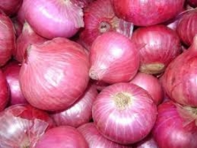 Int'l Conference on Onion Seed Production today in Colombo