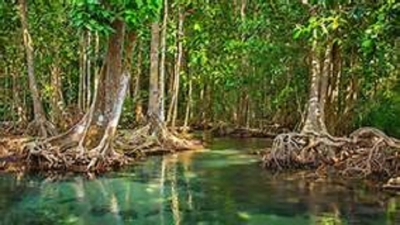 Commonwealth action group on mangroves meets in Sri Lanka