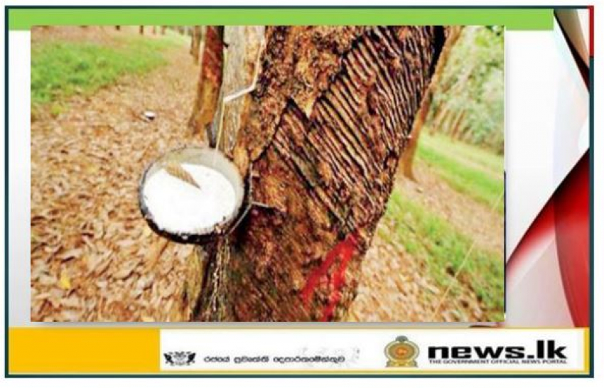 Establishment of a committee for the development of rubber cultivation and its affiliated industries in Sri Lanka.