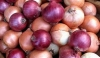 Import levy on big onions hiked