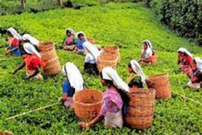 Global tea promotion campaign to begin in May