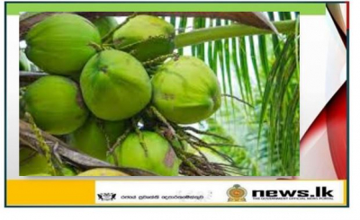 Island Wide Coconut Development Programs in Celebration of International Coconut Day